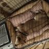 【柴犬】ペット用のベッド買ってみた