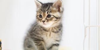 娘さんと一緒に住んでいる友人の家にはたくさんの猫がいた。やがて猫たちは寿命を迎えていったんだけど…