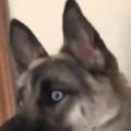 イヌが何かを見ていた。いったいどうしたの? → さっきからずっとこんな顔です…