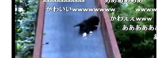 滑り台から滑り落ちる子猫の動画がニコニコで人気