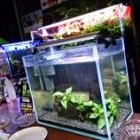 『熱帯魚を見ながらお酒が楽しめる熱帯魚バー@近藤熱帯魚店🐠』の画像