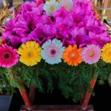 『花祭』の画像