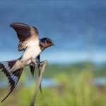 【動物】人間が想像すらできない「色」を鳥が見ていることが3年にわたる実験で示されるwwwwww
