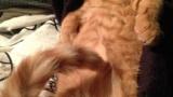 【画像58枚】俺の家の猫の寝相wwwwww