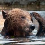 『山でクマに出会った時の正しい対処法(背中を見せて逃げてはダメ!)』の画像
