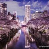 『PENTAX K-1markⅡで夜桜撮ってきた話 【PENTAX】【DFA15-30】【DFA★50】【城南島海浜公園】【目黒川】』の画像