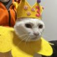 レギュラー猫たち、お目見えの時 20211024