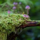 『聖なるキノコ:合法化が進む天然の幻覚植物の使用』の画像