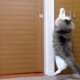 可愛い猫 ノルウェージャンフォレストキャット2