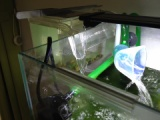 『濁った水槽に「マシジミ」を迎え入れる5(2週間の結果)』の画像