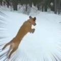 イヌたちはこの時を待っていた。ヒャッハ~! → 積もった雪にこうなります…