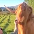 牛だって気持ちイイのは大好き!「止めないで!」と、ブラッシングにとろけそうな笑顔を浮かべるハイランド牛