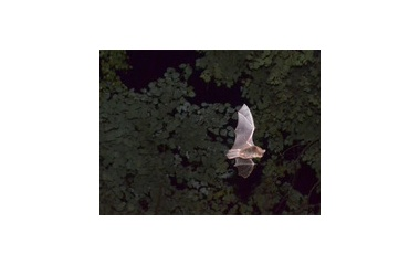 『忙しく飛び回る』の画像