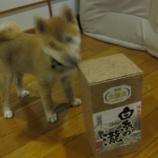 『愛犬とニオイ・24時間換気』の画像