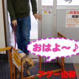 『とある日の看板犬アグーの1日に密着!! part1』の画像