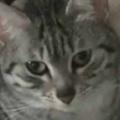 ネコがクッションの上でくつろいでいた。今日はちょっと冷えますね → 子犬はこうなった…