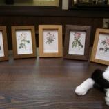『バラの額・キャットミント』の画像