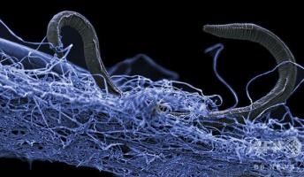 海底地下に広大な「生命体の森」発見 数百万年前から存在の可能性も