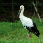 stork-field  2nd