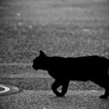 『名作推理小説【黒猫館の殺人】綾辻行人』の画像