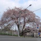 『わが家の桜10 9』の画像