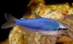 インパイクティス・ケリー・スーパーブルーとかいう魚、メッチャ綺麗
