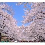 『SERIES東京桜2015』の画像