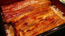 【飲食】うなぎ稚魚が豊漁、取引価格18年から半額に