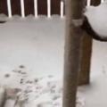 うちには2匹の猫がいる。今日は雪が降っていた → 猫はそれぞれこうなった…