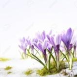 『雪解け』の画像