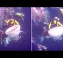 サメに「乗った」ダイバー逮捕される(動画あり)