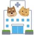 キャリーバッグを出すと隠れてしまうので、たまたま入っていた段ボールのまま動物病院に連れて行かれた猫さんがこちら