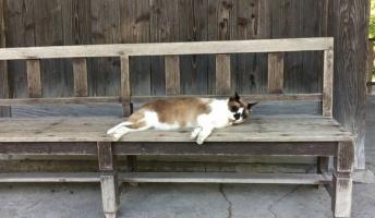 駅に変なネコがいたんだがwwwwwwwwww