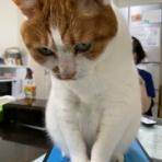 グリーンパーク動物病院スタッフブログ
