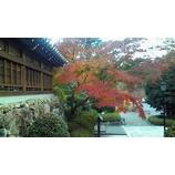 『去っていく秋を惜しむように』の画像
