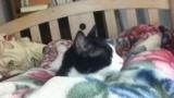 【画像多数】うちの猫可愛すぎワロタwww