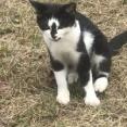 野良猫に毎日顔を見せて敵意がないことをアピールしてたら近くに寄って見送ってくれるようになった