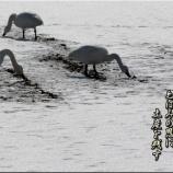 『鳥たちの土産物』の画像