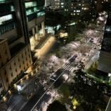 『桜ライトアップ』の画像