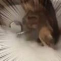 【ネコ】 私がお風呂に入っていると猫がやってきた。泡が気になる! → 猫はこうなった…
