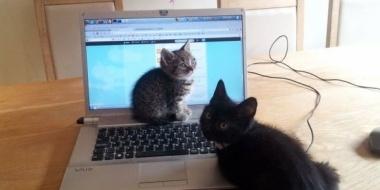 可愛い猫の画像が怖い