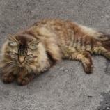 『【写真】RX1  笠森観音様の猫 (茂原)』の画像