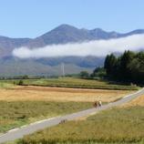 『蕎麦畑、実る。』の画像
