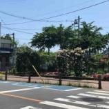 『戸田駅南側の花壇、市民の方のお世話で素晴らしい景観が生まれています!』の画像
