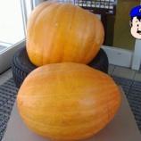 『かぼちゃと日曜日の虹』の画像