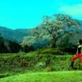 桜見2014・泥沼旅