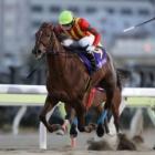 『【大井・東京シンデレラマイル】ラーゴブルーが押し切り重賞2勝目』の画像