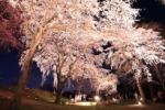 OH!満開でんがなっ!交野市内の桜が満開になってるのでその写真いろいろ