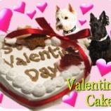 『今年のバレンタインは愛するワンちゃんに甘いプレゼント♥』の画像