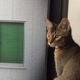 『ヤンチャ坊主×2』の画像
